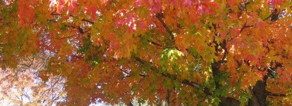 Plattsmouth Fall Colors 004